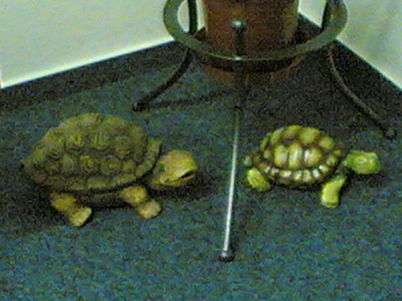Sbírka želviček IV.